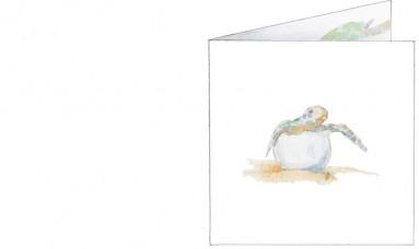 voorkant | Eryn | schildpadden