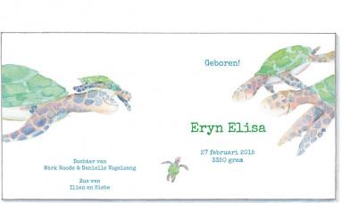 binnenkant | Eryn | schildpadden
