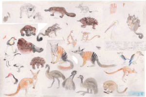 Tekeningen Australische dieren deels gebruikt voor het geboortekaartje van Joël. Let op: met copyright!