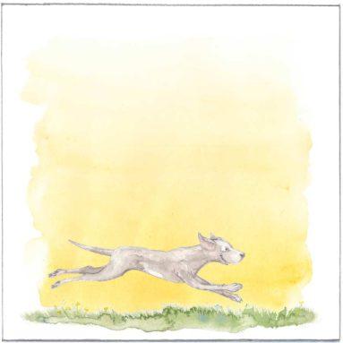 Envelop | Aurora | hond en paarden