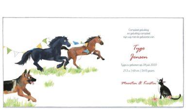 binnenkant | Tygo | paarden, honden en een poes
